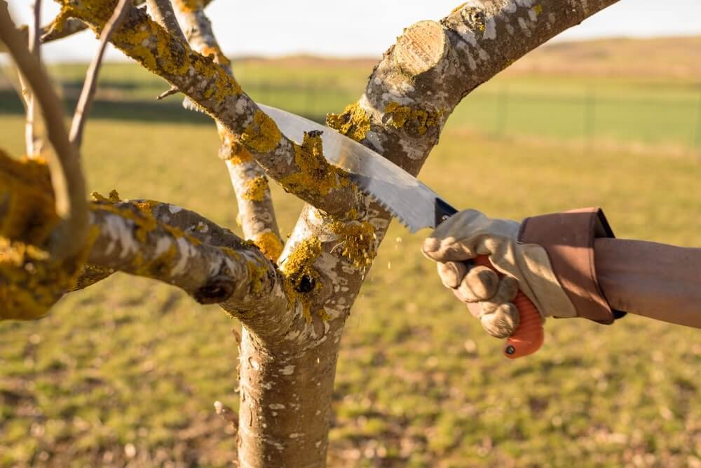 bst saw for cutting tree branches.
